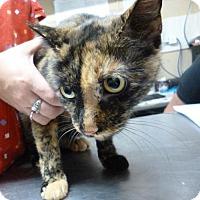 Adopt A Pet :: Emma (Merritt Island Center) - Cocoa, FL