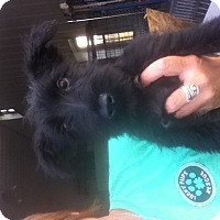 Adopt A Pet :: Regan - Brazil, IN