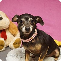 Adopt A Pet :: Coo Coo - Martinez, GA