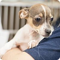 Adopt A Pet :: Heather - Dallas, TX