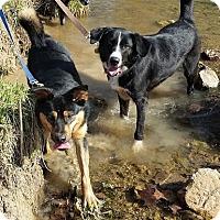 Adopt A Pet :: Simeon and Garfunkel *Bonded* - Appleton, WI