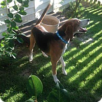 Foxhound Mix Dog for adoption in Summerville, South Carolina - Skippy