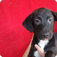 Adopt A Pet :: Princess - Oviedo, FL