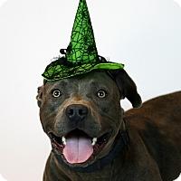 Adopt A Pet :: Sofie - Santa Maria, CA