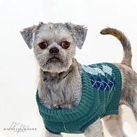 Adopt A Pet :: Gino - Naperville, IL