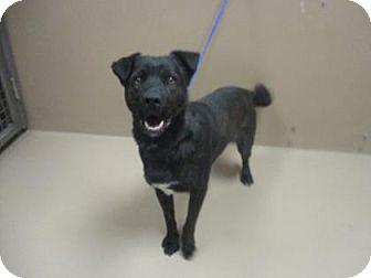 Shepherd (Unknown Type) Mix Dog for adoption in Reno, Nevada - BUDDY