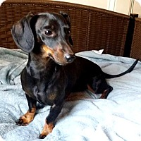 Adopt A Pet :: Owen - Lawrenceville, GA
