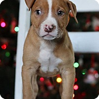 Adopt A Pet :: Zain - Waldorf, MD