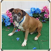 Adopt A Pet :: WILFRED - Marietta, GA