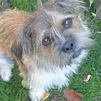 Adopt A Pet :: Shaggy - Denver, CO