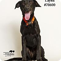Adopt A Pet :: Layna #70600 - Baton Rouge, LA
