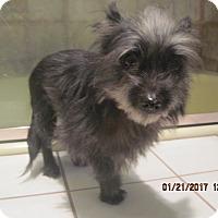 Adopt A Pet :: TESS - La Mesa, CA