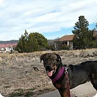 Adopt A Pet :: REECE - Pena Blanca, NM