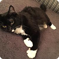 Adopt A Pet :: Betsy - Cincinnati, OH