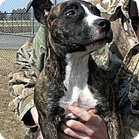Adopt A Pet :: Alexis - Ludington, MI