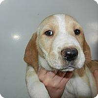 Adopt A Pet :: Moose - South Jersey, NJ