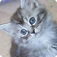 Adopt A Pet :: Micheal - Irvine, CA