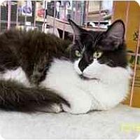 Adopt A Pet :: Mackenzie - Sacramento, CA