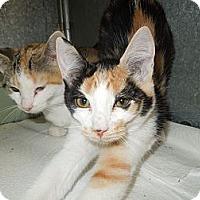 Adopt A Pet :: Candi - Medina, OH