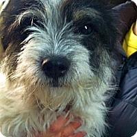 Adopt A Pet :: Evie - Green Bay, WI