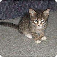 Adopt A Pet :: Kippy - Kirkwood, DE