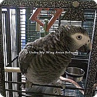 Adopt A Pet :: Lucy - Wantage, NJ