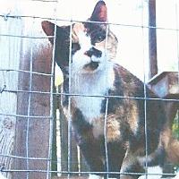 Adopt A Pet :: Snookie - Harrisonburg, VA