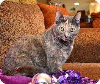 Domestic Mediumhair Cat for adoption in Dallas, Texas - Ashley
