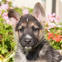 Adopt A Pet :: Jack von Tia - Thousand Oaks, CA