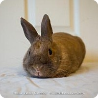 Adopt A Pet :: Willow - Woburn, MA
