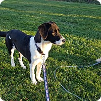 Adopt A Pet :: Treasure - Middletown, RI