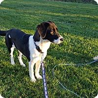 Adopt A Pet :: Treasure - West Warwick, RI