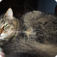 Adopt A Pet :: Nattie - Leamington, ON