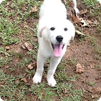 Adopt A Pet :: Snow (courtesy listing) - Bartonsville, PA