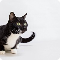 Adopt A Pet :: Carol - Mission Viejo, CA