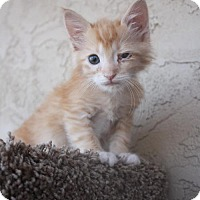 Adopt A Pet :: Goku - Phoenix, AZ