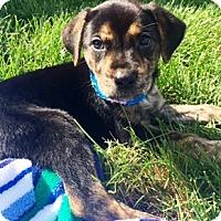 Adopt A Pet :: Maddie - Oswego, IL