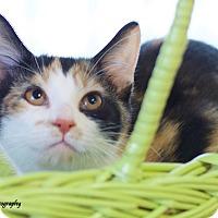Adopt A Pet :: Louise - Marietta, GA