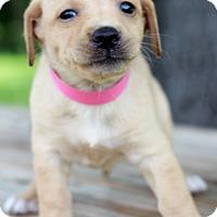 Adopt A Pet :: Bebe - Waldorf, MD