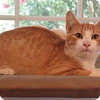 Adopt A Pet :: Augusta - High Point, NC