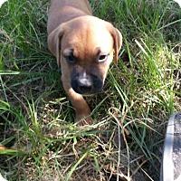 Adopt A Pet :: Dizzy - Matthews, NC
