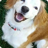 Adopt A Pet :: CO/Rainy (ADOPTION PENDING) - Seattle, WA