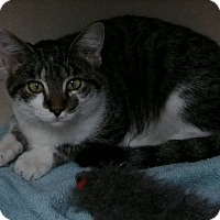 Adopt A Pet :: Stewie - Cheboygan, MI