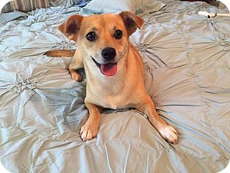 Terrier (Unknown Type, Small) Mix Dog for adoption in Fort Atkinson, Wisconsin - Dolly