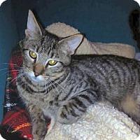 Adopt A Pet :: Mouse - El Cajon, CA