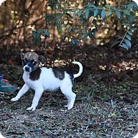Adopt A Pet :: Minnie - Groton, MA