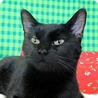 Adopt A Pet :: Una - Lloydminster, AB