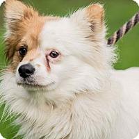 Adopt A Pet :: Ludlow - San Diego, CA