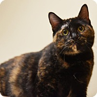 Adopt A Pet :: Gertie - Chicago, IL