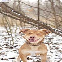 Adopt A Pet :: CHIP - Peoria, IL